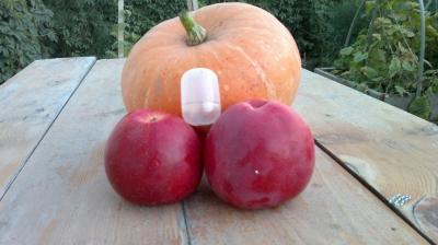 Яблоня сорт Анис свердловский (крупноплодная)