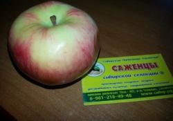 Яблоня  крупноплодная колоновидная сорт Южноуральское